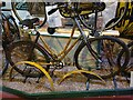 SO0660 : National Cycle Museum - a Bamboo Bike by Oliver Dixon