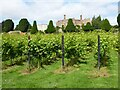 TR0653 : Vineyard at Chilham by Philip Halling
