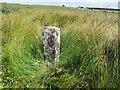 SX1674 : Estate Boundary Marker in the valley between Brockabarrow Common and Sprey Moor by P G Moore