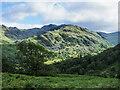 NY2414 : Bracken covered slope descending towards Seatoller by Trevor Littlewood