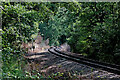 SO7778 : Severn Valley Railway near Trimpley, Worcestershire by Roger  Kidd