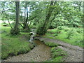 SJ9818 : Sher Brook, looking downstream [locally north] by Christine Johnstone