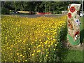 NS5472 : Daisies and sculpture by Richard Sutcliffe