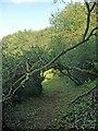 SS8577 : Fallen trees obstructing public footpath, Cwm y Befos by eswales
