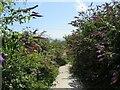 SY6970 : South West Coast Path, Isle of Portland by Malc McDonald