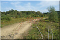 SU5065 : Track on Greenham Common by Des Blenkinsopp