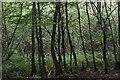 TQ5951 : Kiln Wood by N Chadwick