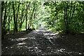 TQ5951 : Bridleway, Kiln Wood by N Chadwick