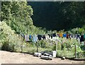 TR1749 : Nice day for  pigs and drying clothes, near Kingston by pam fray