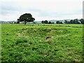 SK1356 : Old dew pond by Gratton Lane by Ian Calderwood