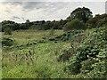 NZ4420 : Wetland Area by David Robinson