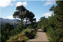 NH9910 : Forestry road through Glen More by Julian Paren