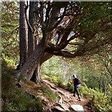 NH9910 : Footpath up Glen More by Julian Paren