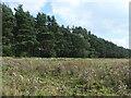 SE8775 : Park Plantation, east of Scampston Hall by Christine Johnstone