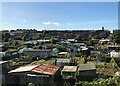 NZ4248 : Allotments At Dawdon by David Robinson
