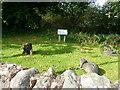 NX9665 : Ged Loch Wildlife Site, New Abbey by Eirian Evans