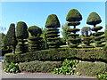 ST1871 : Topiary, Alexandra Park, Penarth by Robin Drayton