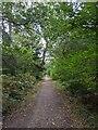 TF0820 : A leaning Oak by Bob Harvey