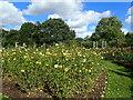 TQ2882 : Queen Mary's Garden, Regent's Park by Marathon