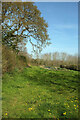 SX7762 : Roadside field near Huxhams Cross Farm by Derek Harper