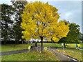 SK3383 : Autumn colour at Rosie's Corner by Graham Hogg