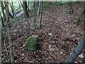 SO9214 : Boundary Stone, Peak Plantation, Birdlip by Mr Red