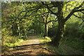 SX8474 : Templer Way approaching Teigngrace by Derek Harper