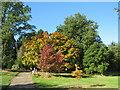 SE2754 : Autumn colour at Harlow Carr Gardens, Harrogate by Malc McDonald
