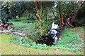 TL8447 : Wetland area at Parsonage Farm by Des Blenkinsopp