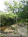 SX5669 : Newleycombe Lake feeding Burrator Reservoir by David Smith