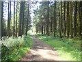 J2721 : Path in Crocknafeola Wood by Eric Jones