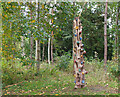 NT5034 : A climbing tree, Abbotsford by Jim Barton