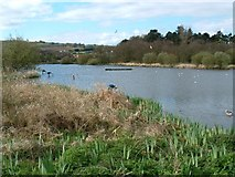 J4774 : Kiltonga Nature Reserve, Newtownards by Michael Parry