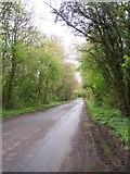 SO8534 : Tree-lined Road, Bushley by Bob Embleton