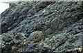 SM8841 : Pillow lavas near Strumble Head [Fishguard] by Jeff Thomas