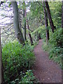 NU0601 : The riverside/woodland path from Rothbury to Thrum Mill. by Ann Hodgson