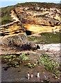 NJ1570 : Cliffs at Clashach Cove by Anne Burgess