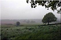 SU7824 : Looking across farmland to Durford Wood by Martyn Pattison