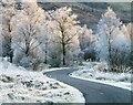 NN0348 : Birch trees near Elleric by Toby Speight