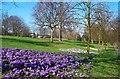 SK4641 : Chaucer Old Park, Ilkeston by Garth Newton