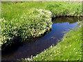 V3698 : Close up of Stream/ Bog area by Pam Brophy
