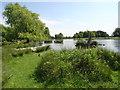 TQ1669 : Heron Pond, Bushy Park by steve