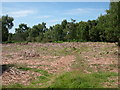 SJ9719 : Site of P.O.W. Camp at Cannock Chase 1914-1918 by Nevin Arrow