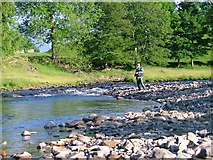 NY9624 : River Tees by Mick Garratt