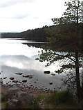 NH9718 : Loch Garten by Bob Jones