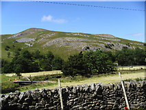 NY7906 : Birkett Hill by John Illingworth