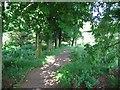 NS3162 : Path, Muirsheil Country Park by Richard Webb