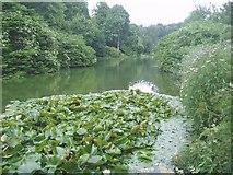 ST7733 : The Garden Lake at Stourhead by Nigel Freeman