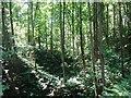 NT1888 : Disused quarry, Cullaloe Hills. by Richard Webb