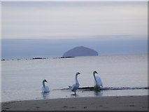 NS2109 : Ailsa Craig, from North end of Maidens Bay by Tony Page